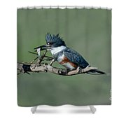 Belted Kingfisher Hen With Fish Shower Curtain