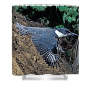 Belted Kingfisher Leaving Nest Shower Curtain