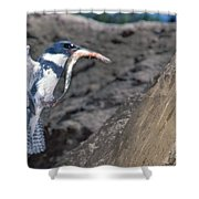 Belted Kingfisher With Prey Shower Curtain