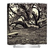 Bench And Trees Bw Shower Curtain
