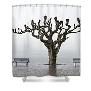 Benches And Tree Shower Curtain