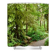 Bend In The Rainforest Shower Curtain