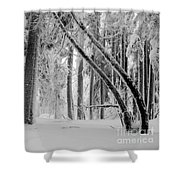 Bending Snow Trees Shower Curtain