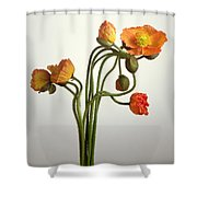 Bendy Poppies Shower Curtain by Norman Hollands