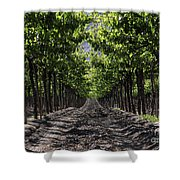 Beneath The Vines Shower Curtain