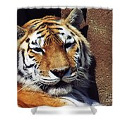 Bengal Tiger 2012 Shower Curtain