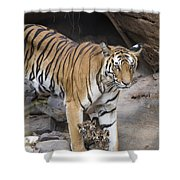 Bengal Tiger And Cubs Bandhavgarh Np Shower Curtain