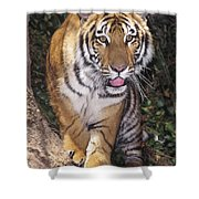 Bengal Tiger By Tree Endangered Species Wildlife Rescue Shower Curtain