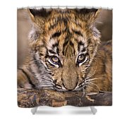 Bengal Tiger Cub And Peacock Feather Endangered Species Wildlife Rescue Shower Curtain