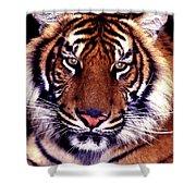 Bengal Tiger Eye To Eye Shower Curtain