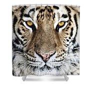 Bengal Tiger Eyes Shower Curtain