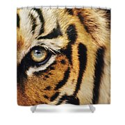 Bengal Tiger Face Shower Curtain