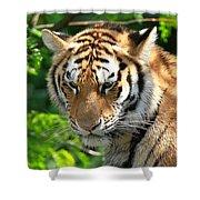 Bengal Tiger Portrait Shower Curtain