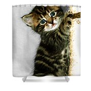 Benny The Kitten Playing Shower Curtain