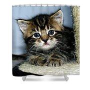 Benny The Kitten Resting Shower Curtain