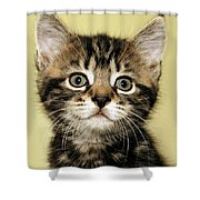Benny The Pussy Cat Shower Curtain