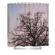 Bergen  Winter Tree Shower Curtain by Hakon Soreide