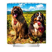 Bernese Mountain Dog And Leonberger Among Wildflowers Shower Curtain