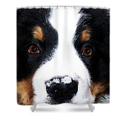 Bernese Mountain Dog - Baby It's Cold Outside Shower Curtain