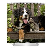 Bernese Mountain Puppy & Kitten Shower Curtain