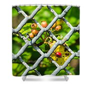 Berries And The City - Featured 3 Shower Curtain
