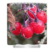 Berries In Ice Shower Curtain
