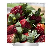 Berries In The Kitchen Shower Curtain