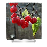 Berries In Winter Shower Curtain