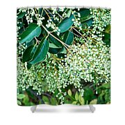 Berries On A Bush Shower Curtain
