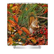 Berry Loving Squirrel Shower Curtain