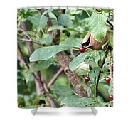 Berry Picker Shower Curtain