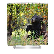 Berry Picking Shower Curtain