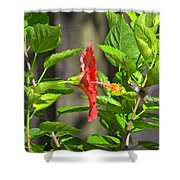 Best Close-up Green Hummingbird On Red Hibiscus Flower. Shower Curtain
