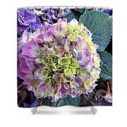 Beter Bloom Late Then Never Shower Curtain