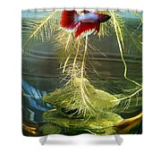Betta Fish Moby Dick Shower Curtain