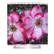 Betty Boop Roses Shower Curtain