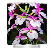 'betty' Orchid Shower Curtain