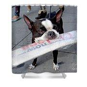 Betty The News Dog Shower Curtain