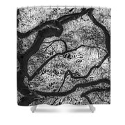 Between Black And White-07 Shower Curtain