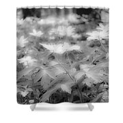 Between Black And White-14 Shower Curtain