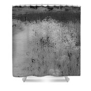 Between Black And White-28 Shower Curtain