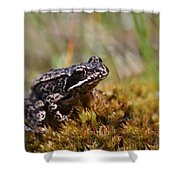 Beutiful Frog On The Moss Shower Curtain