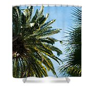 Beverly Palms Shower Curtain