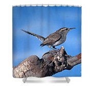 Bewicks Wren Shower Curtain