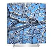 Bifurcations In White And Blue Shower Curtain
