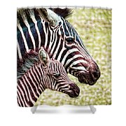 Big And Little Shower Curtain