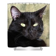 Big Bad Voodoo Kitty Shower Curtain
