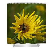 Big Beautiful Bumble Bee On Flower Shower Curtain