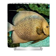 Big Beautiful Fish Shower Curtain