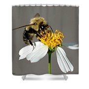 Big Bee Shower Curtain